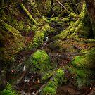 Forest Path by Mieke Boynton