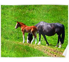 Mare And Foal 2 Poster