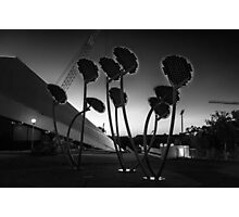Solar Mushrooms Adelaide Festival Centre. Photographic Print