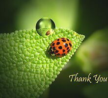 Ladybug Thank you card by walstraasart