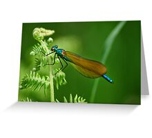 Male Demoiselle Greeting Card