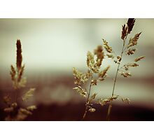Grass in the rain Photographic Print