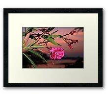 A bloom on the bay Framed Print