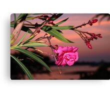 A bloom on the bay Canvas Print