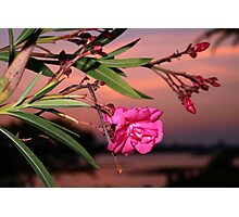 A bloom on the bay Photographic Print