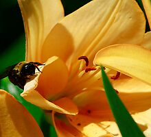 Where's The Nectar? by Brenda Burnett