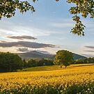 Mynydd Pen-y-Fal (Sugar Loaf Mountain) by Stephen Liptrot