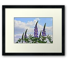 Leaning Lupins Framed Print