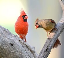 A Redbird's Point of View by Bonnie T.  Barry