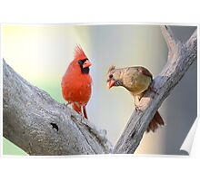 A Redbird's Point of View Poster