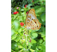 Butterfly 1 Photographic Print