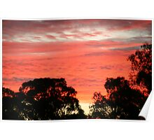 Auburn sunset above the tree-tops, S.A. Poster