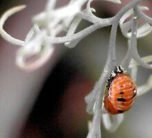 Ladybug Pupa by aprilann