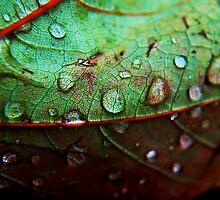 Rain Drop by pb-photography