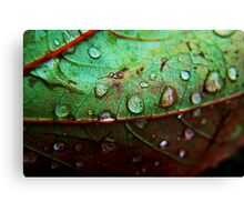 Rain Drop Canvas Print