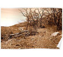 Sepia Landscape Poster