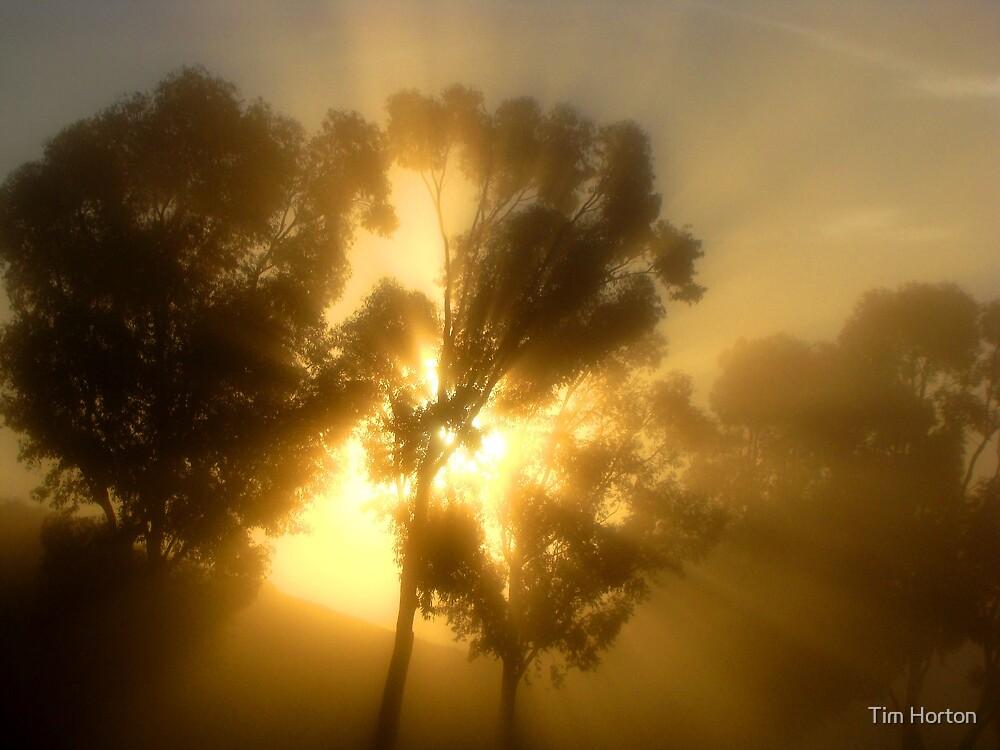 sunburst by Tim Horton