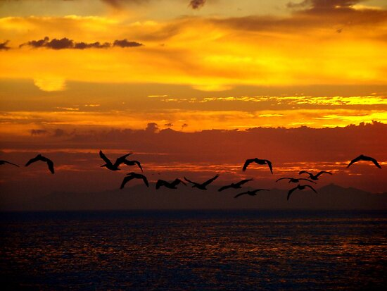 sunset with seagulls Malibu by Tim Horton