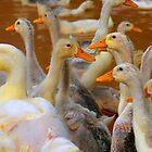 Happy Ducks by Charlie-R
