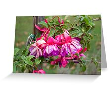 Pink V Purple Greeting Card