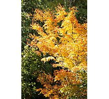 Autumn Orange Photographic Print