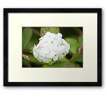 White Flower Ball Framed Print