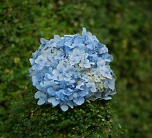 Blue Flower Ball by Jeanne Peters