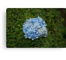 Blue Flower Ball Canvas Print