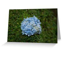 Blue Flower Ball Greeting Card