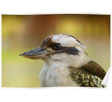 Kookaburra 001 Poster