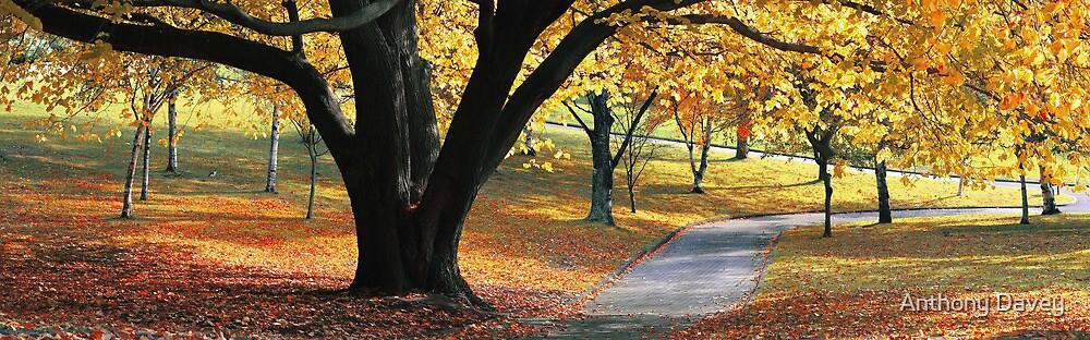 Majestic Autumn by Anthony Davey