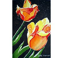 SUN-KISSED TULIPS Photographic Print
