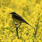 All Yellow by webbo