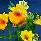 1527-yellow flowers by elvira1