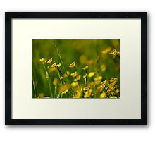 Ere the buttercups peepeth Framed Print