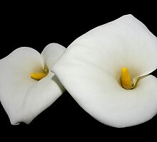 beautiful calla lilies on black by dedmanshootn
