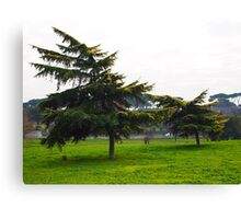 trees downwind Canvas Print