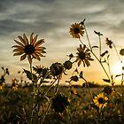 Sundown Flowers by Randy Turnbow