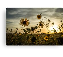 Sundown Flowers Canvas Print