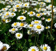 How Does Your Garden Grow? by Matt Sibthorpe