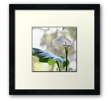 ~ Calla Lily ~ Framed Print