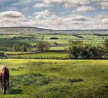 Wensleydale by Theresa Elvin