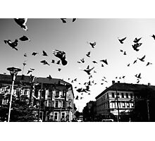 stop the pigeon! Photographic Print