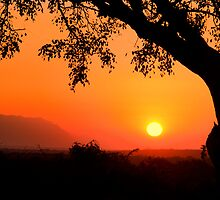 Sunset at Thornhill Safari Lodge - South Africa by Beth  Wode