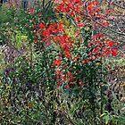Autumn Scarlet by MarjorieB