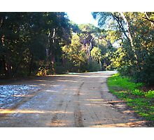 Road in the reserve in winter Photographic Print