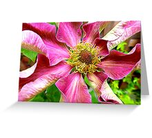 Abilene Clematis Year Two Greeting Card