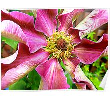 Abilene Clematis Year Two Poster