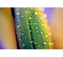 Water droplets on Irish Daffodils Photographic Print