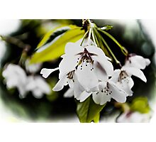 Springtime Blooms Explode Photographic Print